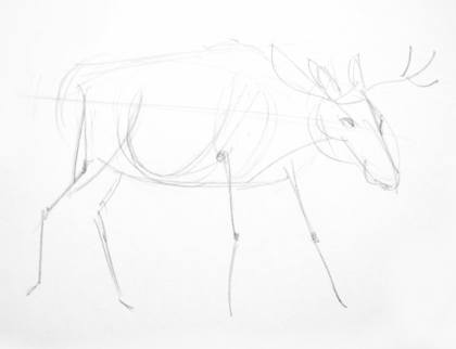 Scetch of a moose