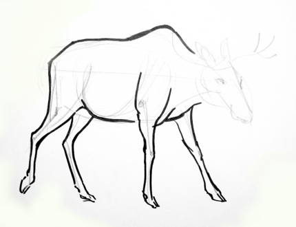 How to draw the legs of a moose
