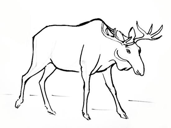 Learn how to draw a kangaroo for How to draw a moos