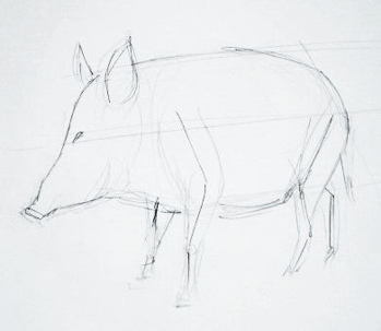 How to draw a hog