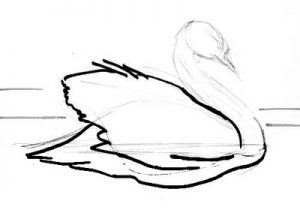 Swan drawind step by step instruction.