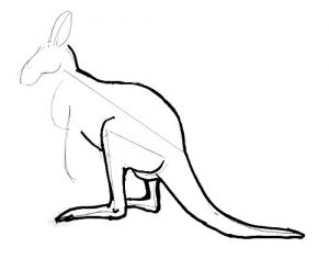 Kangaroo drawings and pictures