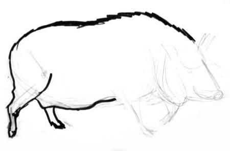 Wild boar female step by step drawing
