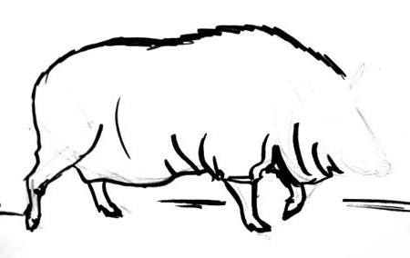 Wild boar drawing 3