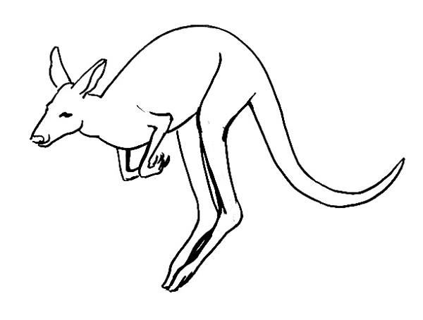 Line Art Kangaroo : Kangaroo coloring pages