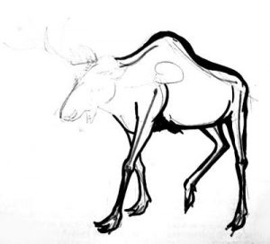 Step-by-step Moose drawing lesson