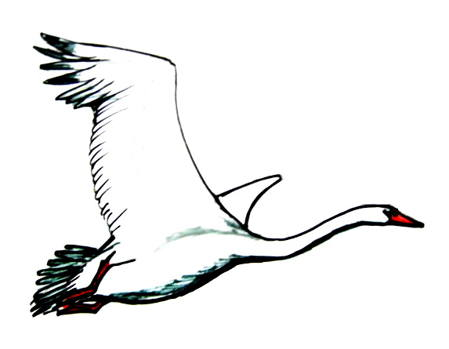 Flying Swan drawing