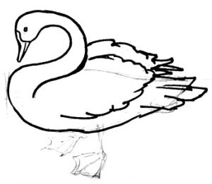 Standing Swan drawing lesson