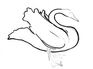 Swan body ?tail and neck drawing