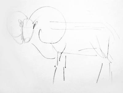 Pincil drawing of a ram