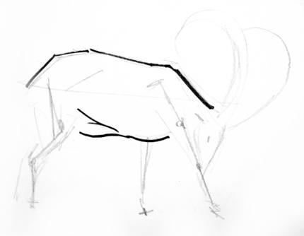 Step by step drawing of a ram
