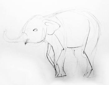Elephant baby drawing