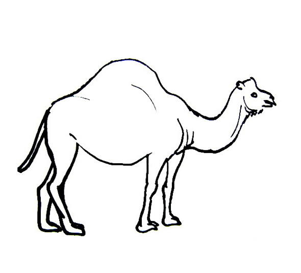Camel coloring pages for kids