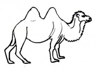 Camel Coloring Picture