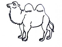 Camel Coloring