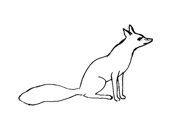 Realistic Fox coloring