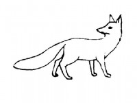 Fox looks around coloring page