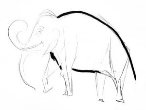 Mammoth drawing step by step.