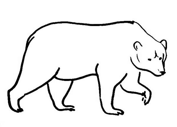 realistic brown bear coloring page - Bear Coloring Pages