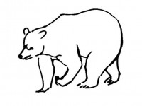 Realistic bear coloring picture