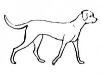 dog coloring pages realistic running - photo#14