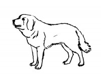 dog coloring pages realistic running - photo#11