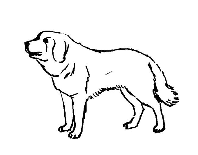 Senbernar dog coloring page