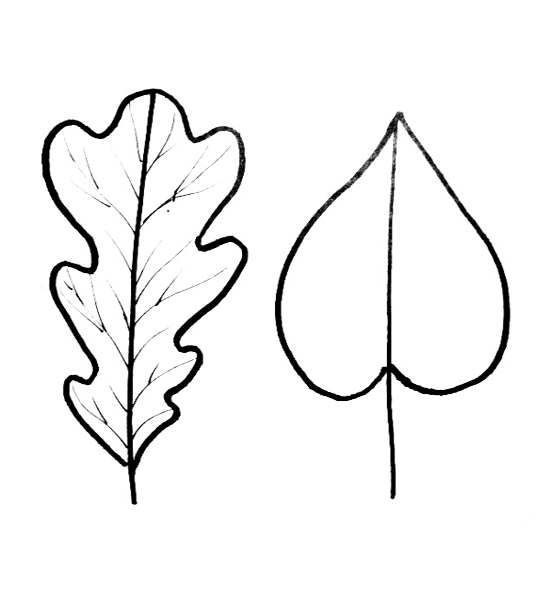 oak leaf coloring pages - photo #24