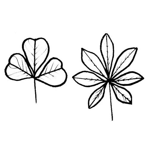 Clover and lupine leaves coloring picture
