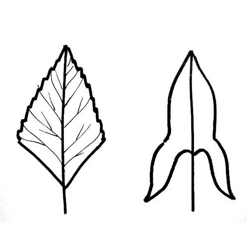 Leaf coloring picture