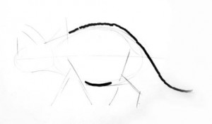 Drawing ofDinozaur triceratops body
