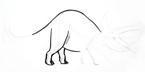 Step by step triceratops drawing