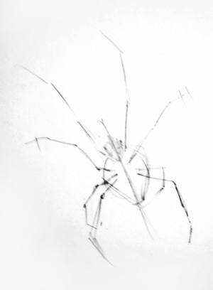 Spider pencil outline