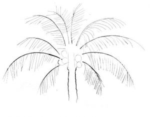 Palm Tree step by step drawing