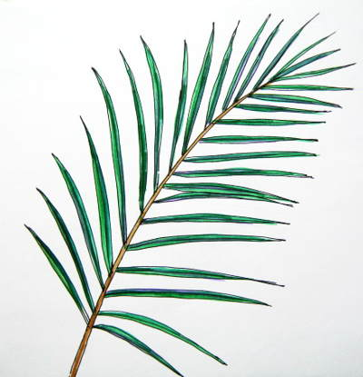 Date Palm Tree Leaf picture 2