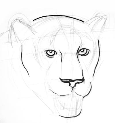 Panther head and face drawing