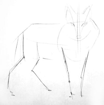 Pencil outline of a wolf