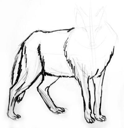 Step by step wolf drawing