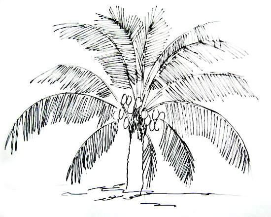 Coconut PalmTree Drawing