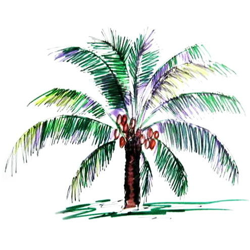 Coconut palm  colored drawing