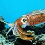 How to draw a sea animal Squid