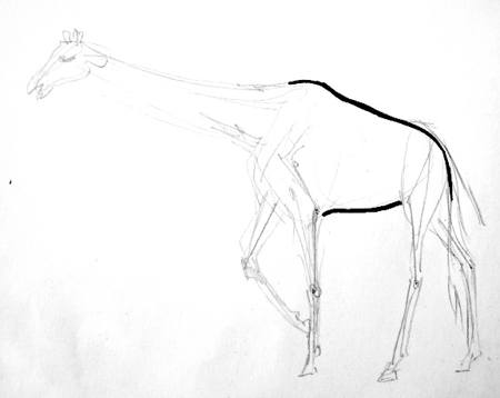 Giraffe gradual drawing