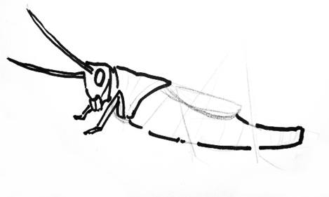 Grasshopper drawing 4