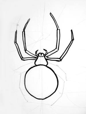 Phased drawing of a Spider