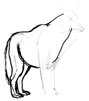 Grey wolf hind legs drawing