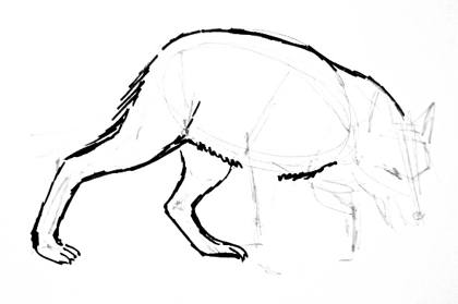Wolf hind legs drawing