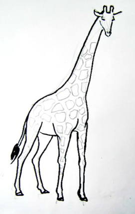 Giraffe`s spots drawing