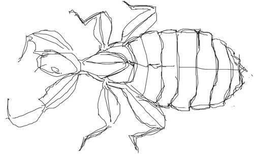 Leaf-insect drawing