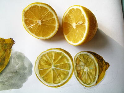 Realistic lemon drawing