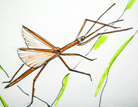 Stick insect image